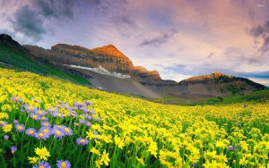 valley-of-flowers-UK